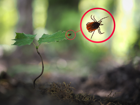 Where Ticks are Active in the U.S.