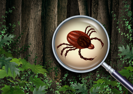 Where are Deer Ticks Found?
